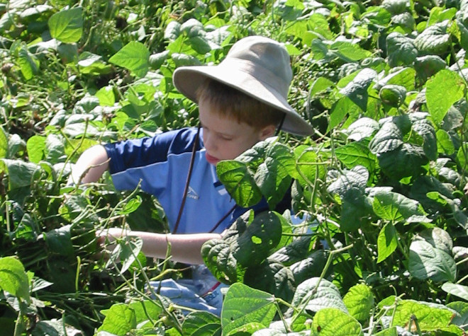 Mark Roberts's son gleaning