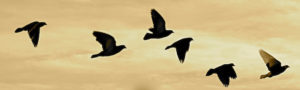 Birds flying in a line