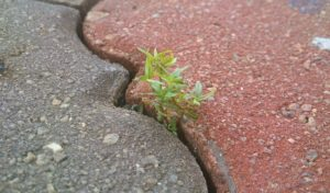 Sapling sprouting out between two bricks