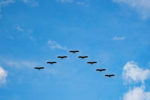 Birds flying in a V-formation