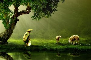 An Asian woman watching over sheep near a pond.