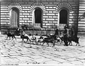 The image depicts a shepherd running his goats in front of Palace Guevara di Bovino, Naples, in 1870s