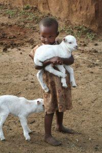 A child hugging a lamb.