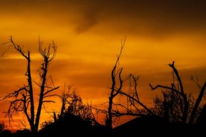 The sun sets on nature that has been damaged.
