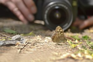A photographer focusing his lens on a small moth.