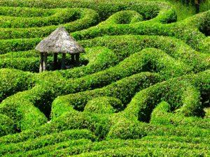 A haven within a garden maze.