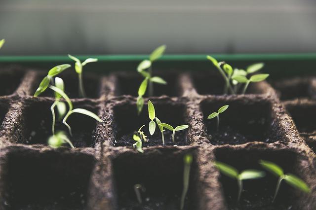 Planting New Paradigms
