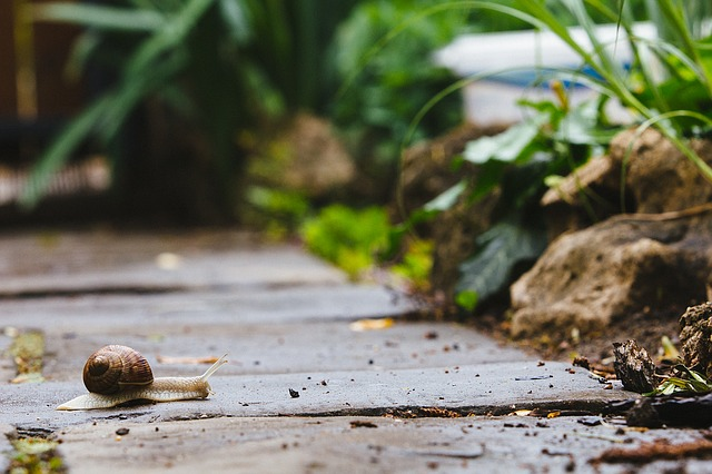 A snail crossing a path, slow and steady.