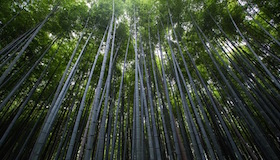 woods-280