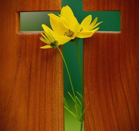 A flower blooming in the middle of the outline of a wooden cross.