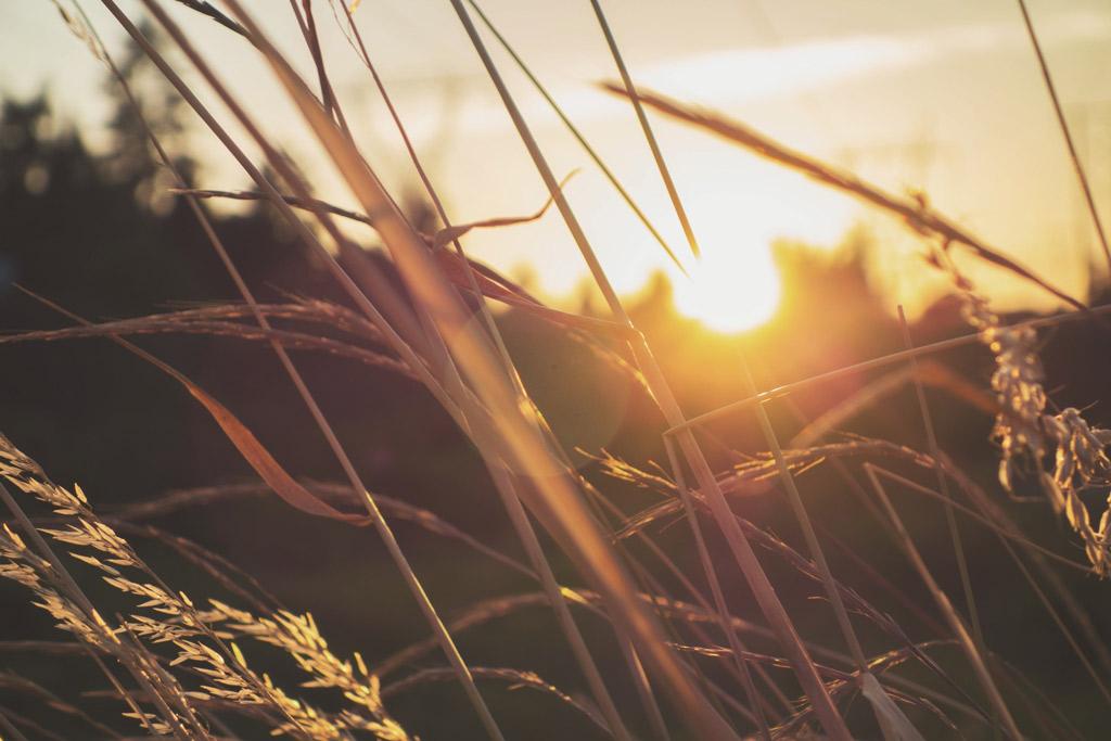 Ruth the Faithful: A Survival Story