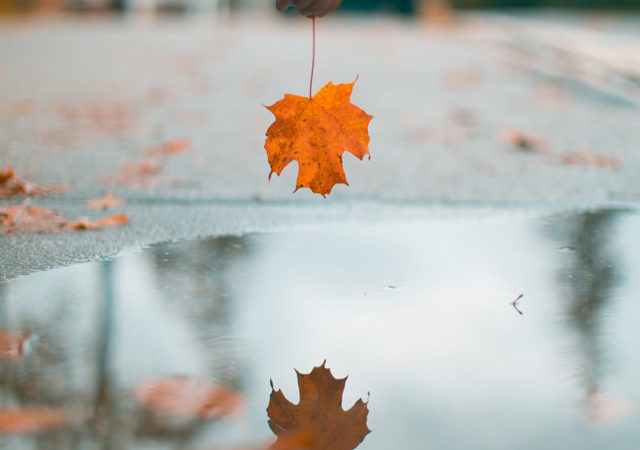 Difficult to look beyond the isolation of an autumn leaf.