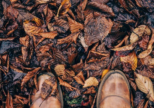 A person in dress shoes, standing among fallen leaves that have changed color.