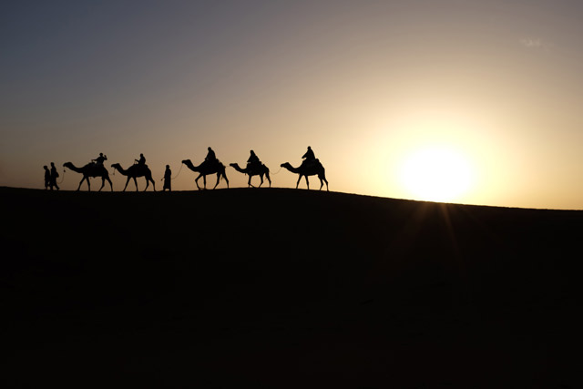 Silhouettes of a camel caravan set in the desert during sun down.