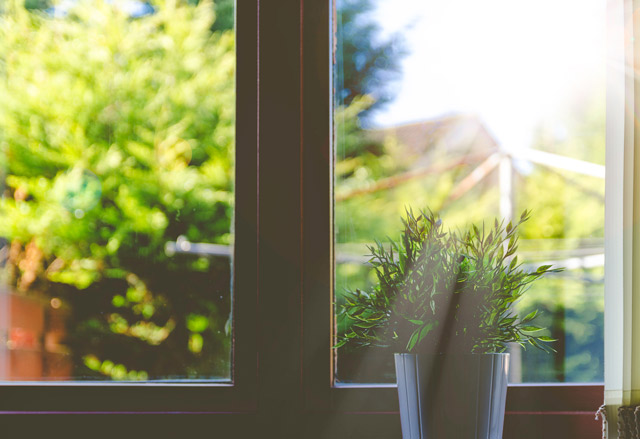 Sunlight pouring into a window, with a plant on the windowsill.