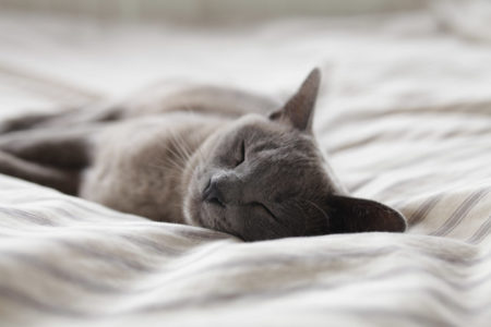 A sleeping cat.