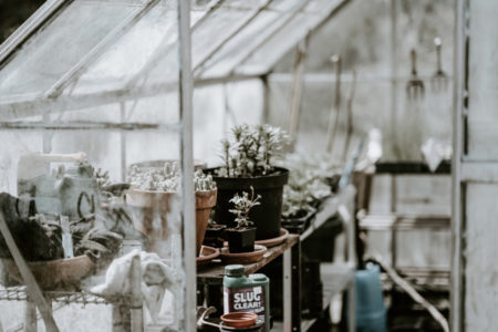 Plants in a greenhouse.