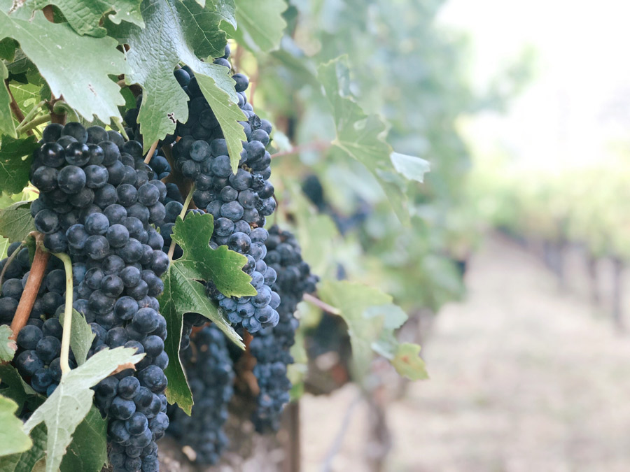 Rhythms of Work: Lessons from the Vineyard