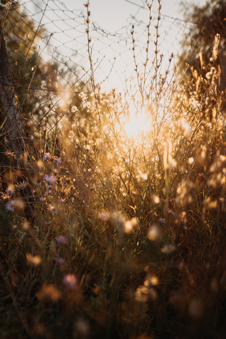 Grace, Gratitude, and Joy