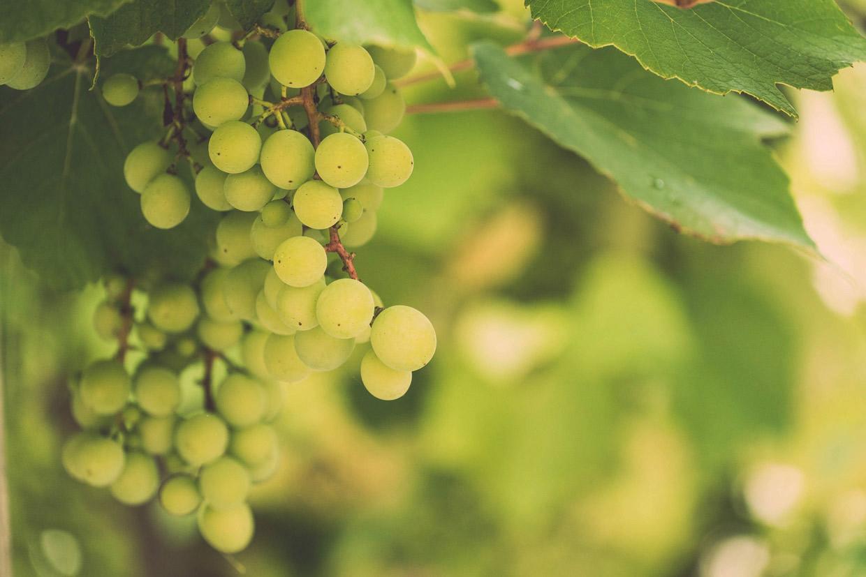 Rhythms of Work: Fruitfulness