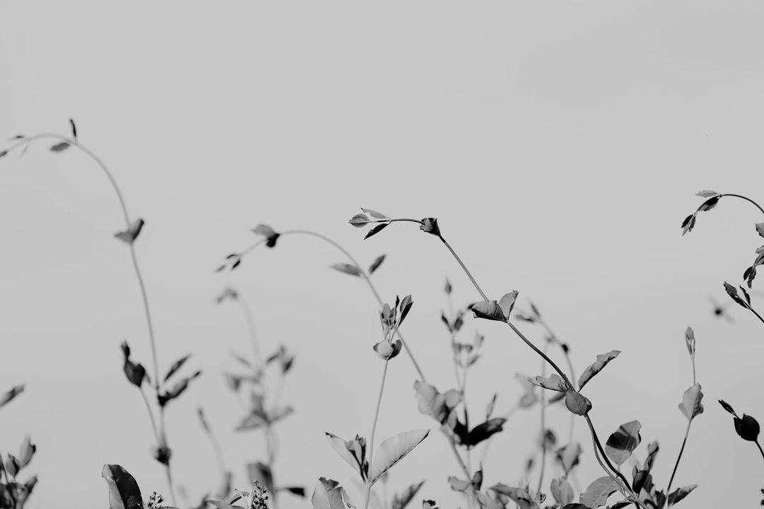 Advent Reflections: Joy