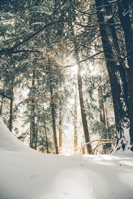 Sunlights through the trees in the snowy woods.