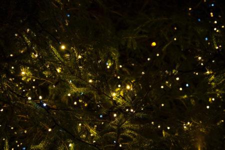 Strung Christmas lights.