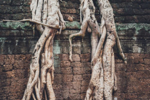 How We Grow in Unity as the Body of Christ