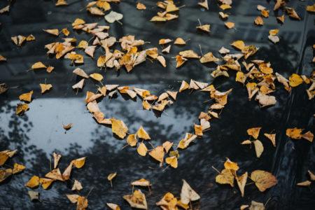 Fallen leaves in the shape of a heart.