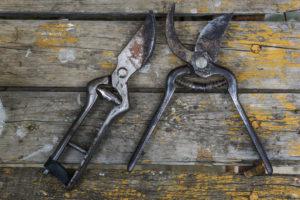 Rhythms of Work: Pruning