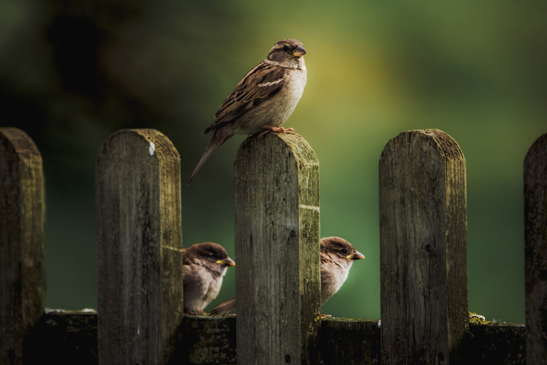 Sparrow Hopes: God's Provision in the World of Freelancing