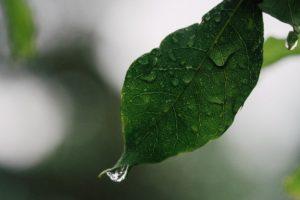 Rhythms of Work – Planting in Hard Times