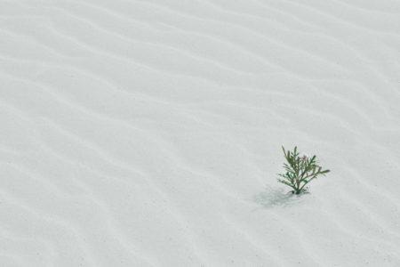 Fuerteventura plant in sand