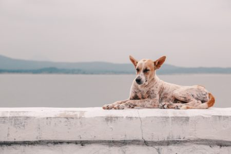 dog laying on ledge overlooking water