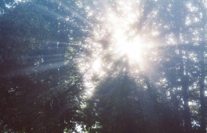 Sunlight bursting through the darkness of Tree tops