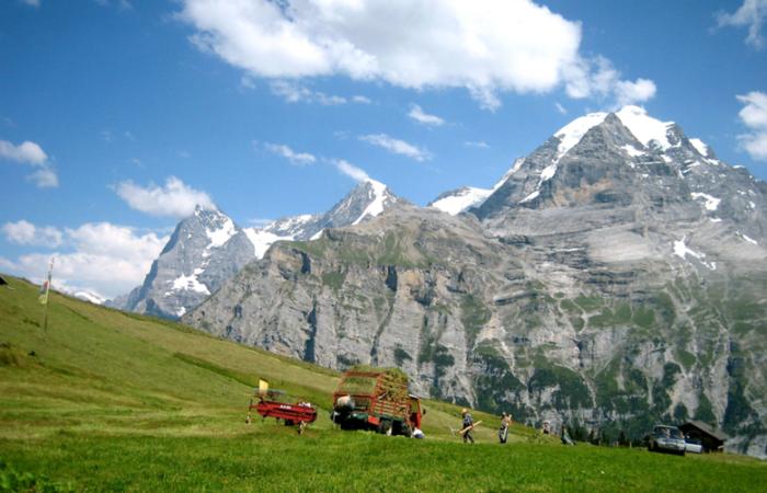 Work in Alpine Fields, photograph by Steve Garber