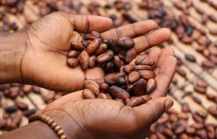 A woman's hands holding beans