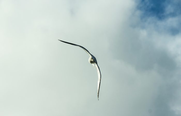 A dove flying through the air