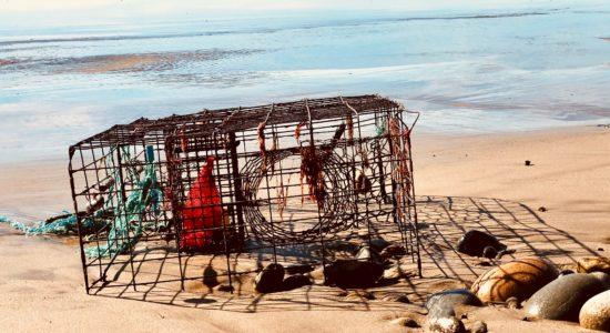 crab trap on beach