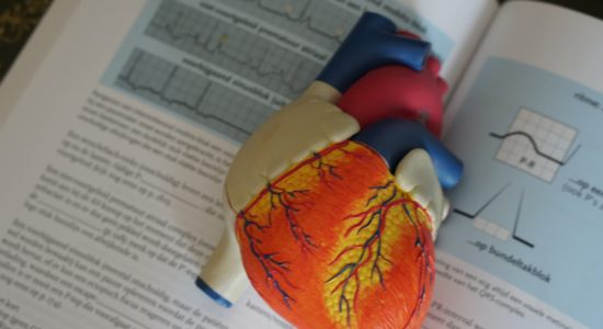 medical model and textbook of human heart