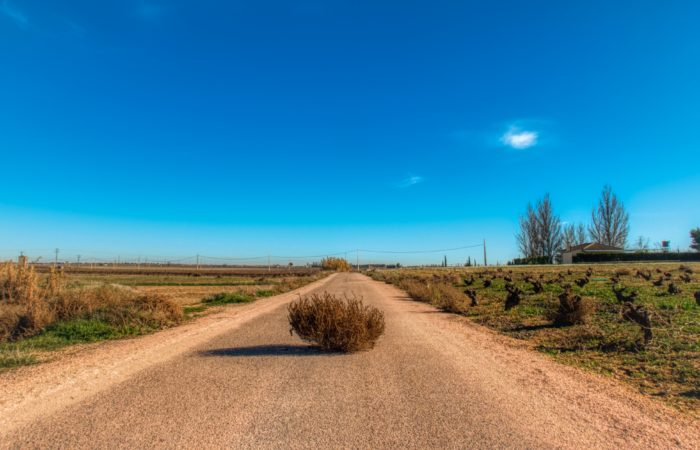 A tumbleweed in the middle of a road