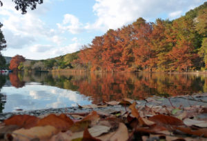 Trees with fall leaves around a lake