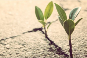 Hybrid Course: Forming Leadership Resilience