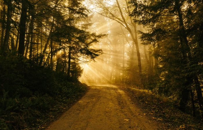 A sunrise around the corner of a forest path