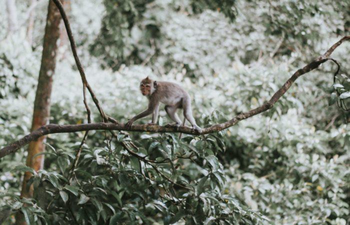 A monkey on a tree limb