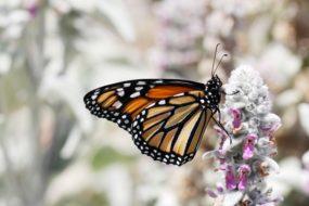 God's Transformational Calling