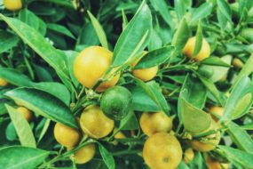 Longing for Fruitfulness in the Third Third of Life