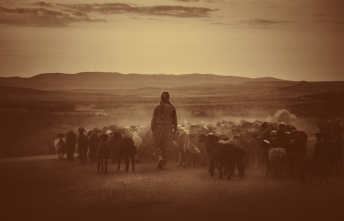 A sepia-toned image of a shepherd in Iran with a group of sheep