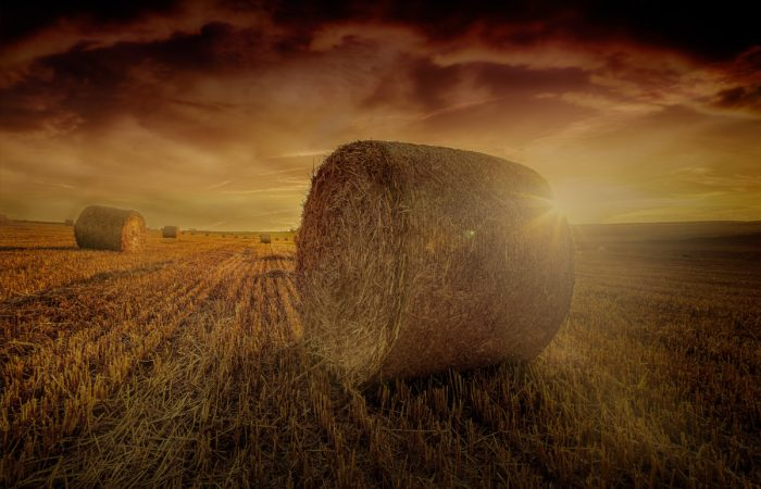 A number of hay bales in a field at sunset