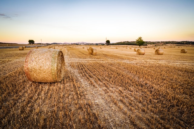 A large field with a number of hay bales